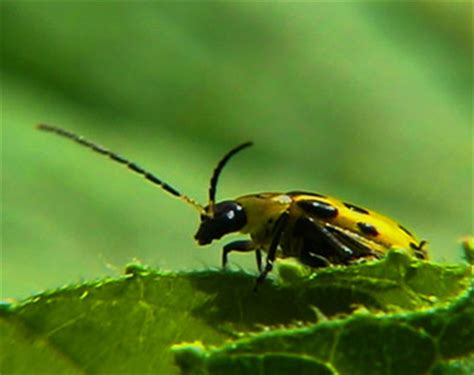 Garden Insects by Garden Insects Broadcasting