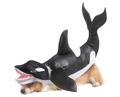 costumes for small dogs top 10 cutest costumes for small dogs