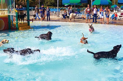 puppies in pool puppies in the pool tallahassee magazine september october 2015