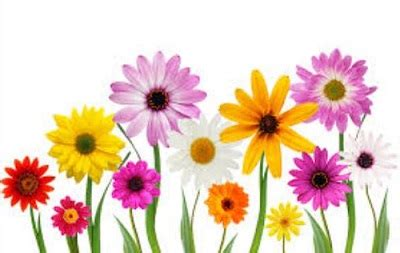 printable real flowers free clipart images of flowers flower clip art pictures
