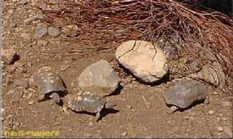 lada per tartarughe riserva naturale di monte arcosu isola sarda sardegna