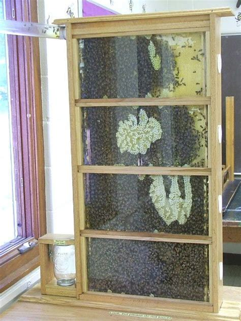 top bar hive woodworking plans