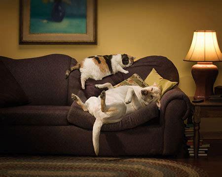 gatti divani divani e gatti due amori una soluzione divani it
