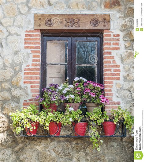 north window plants window with potted plants stock image image of glass