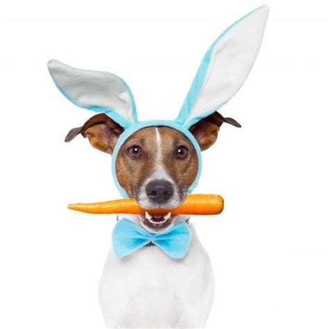 bunny ears for dogs easter treats that are not so sweet for our pets leesburg vet