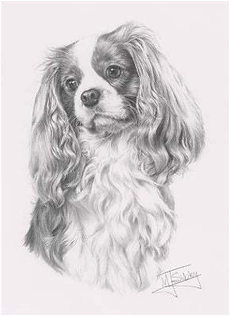 coloring pages of cavalier king charles spaniels print of a cavalier king charles spaniel by the dog