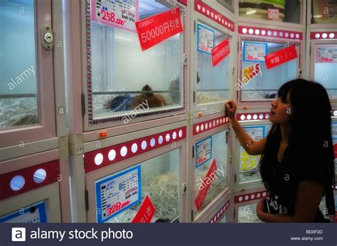 puppies store japanese shopper in a pet store with puppies for sale shinjuku stock photo royalty