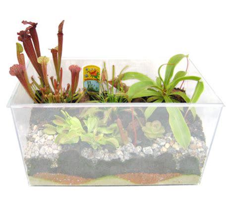 fleischfressende pflanzen kaufen fleischfressende pflanzen spielzeug einebinsenweisheit