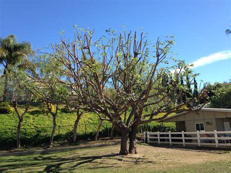 tree orange county orange county tree service tree services archives orange