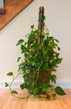 Totem Pole Plant Support Garden Design Ideas
