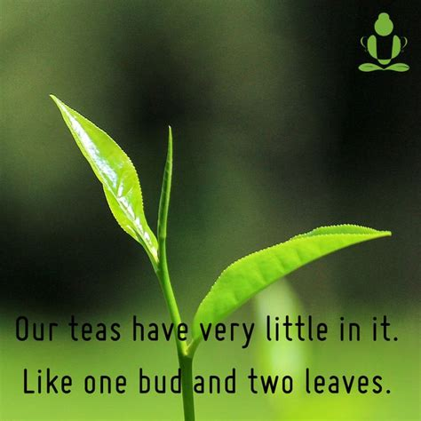 Two Leaves And A Bud Detox Tea by 87 Best Teamonk Global Images On Tea Teas And