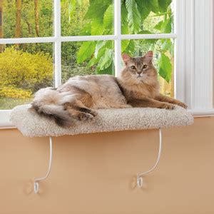 window perch s day gift guide for cats and cat catster