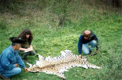 imagenes del jaguar en su habitat status actual del jaguar