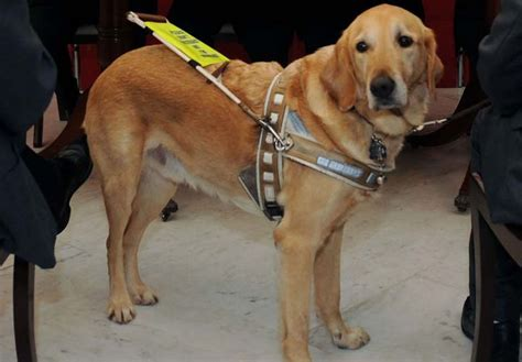 guide dogs gozo news