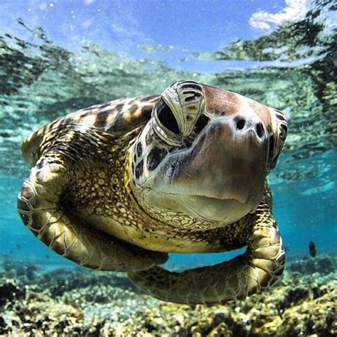 Turtle From Creature Comforts by 17 Best Images About Turtles On Swim Turtle