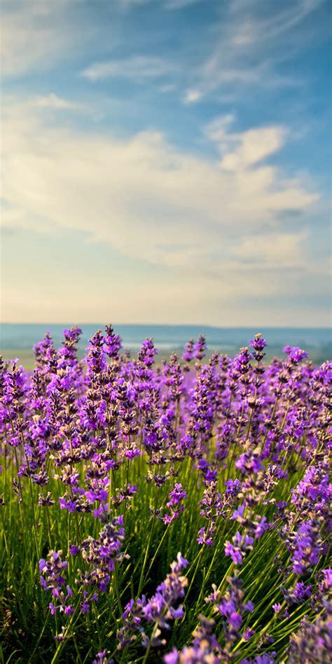 fototapete lavendel fototapete lavendel tapete kunstdruck wandbild ebay