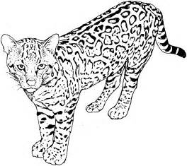 cat coloring pages cats coloring pages kitten coloring pages cool cats 33 free printable