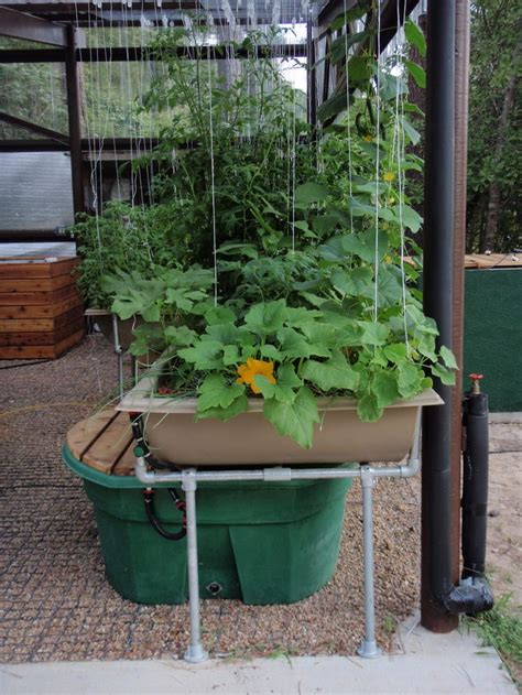 7 best images about aquaponics patio garden kit on