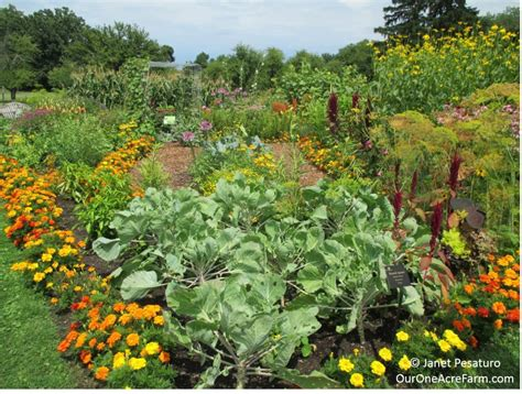 a backyard farm what to raise on your homestead or backyard farm