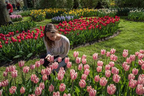 tulips net kate images of tulips in amsterdam impremedia net