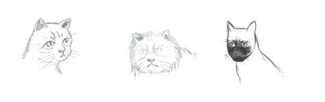 cara dan teknik menggambar untuk pemula cara menggambar kucing