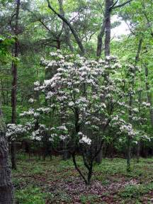 Flowering Shrubs For Afternoon Sun - 10 easiest to grow flowering shrubs homemade by jaci