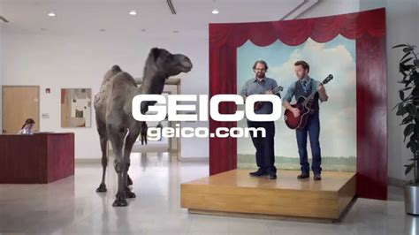 geico camel commercial hump day geico hump day camel commercial happier than a camel on