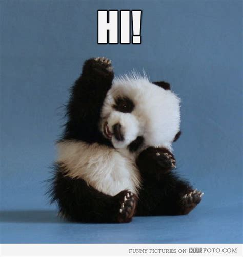 Hi Meme - hi funny panda toy looks very cute saying quot hi quot funny