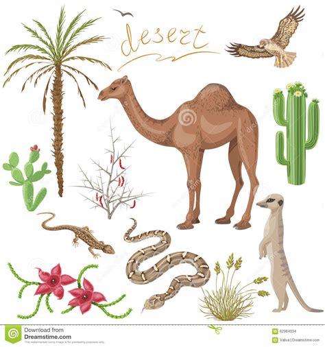 imagenes de animales del desierto plantas y animales de desierto fijados ilustraci 243 n del