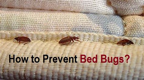 The Heat Treatment For Bed Bugs