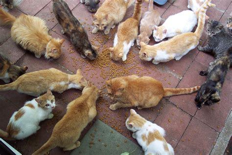 veleno per gatti fatto in casa file of cats circle around catfood jpg wikimedia