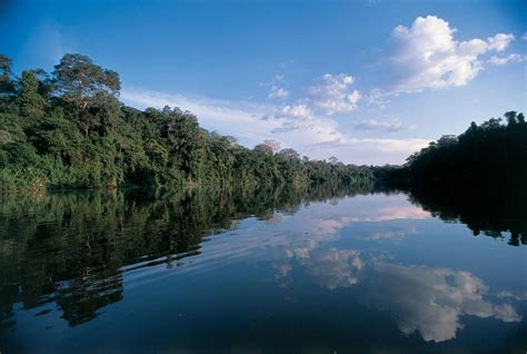 amazon river travel guide to amazon river brazil xcitefun net