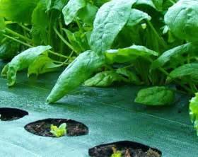 Landscape Fabric Vegetable Garden Fabric Vegetable Garden Landscaping