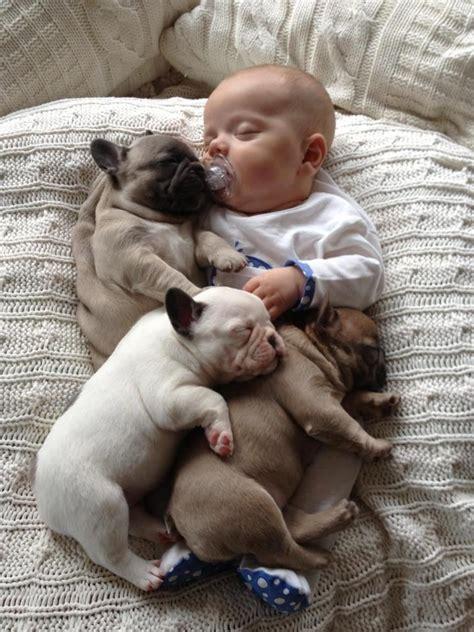 comfort animal comfort cute baby and animal photos pinterest