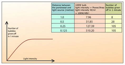 How Does Light Intensity Affect Photosynthesis by 41 Effect Of Light Intensity On The Rate Of