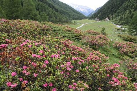 fiore club centro benessere nelle valli di tures e aurina per una vacanza all insegna
