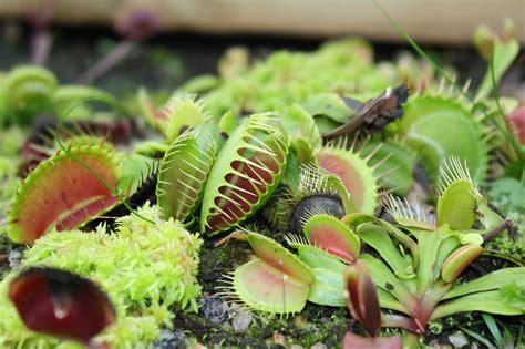 carnivorous plants uri botanical gardens blog
