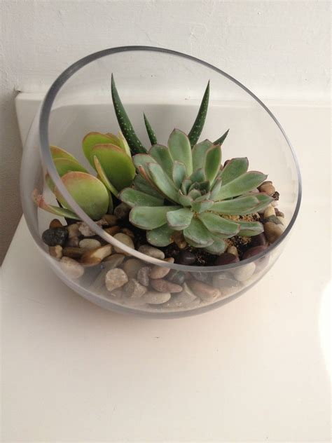 Succulent House | sprinkling decorating with succulents around the house