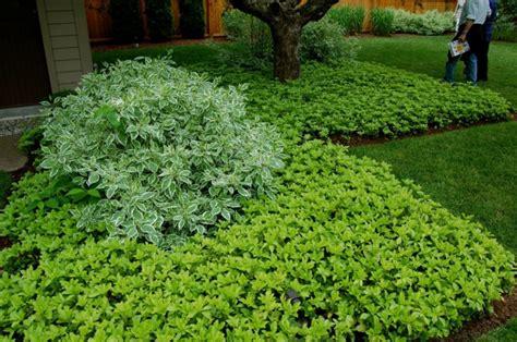 baum im garten pflanzen 2760 garten mit schatten pflanzen welche arten eignen sich