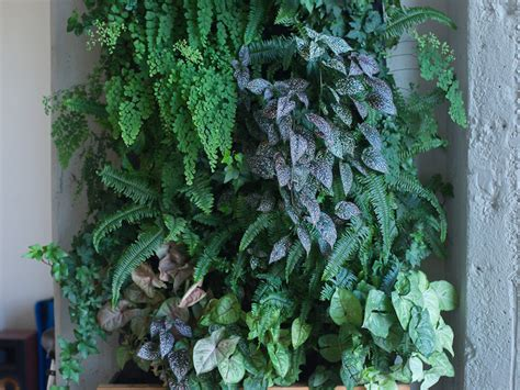 Self Watering Vertical Garden Self Watering Vertical Garden Models Bring Greenery Indoors