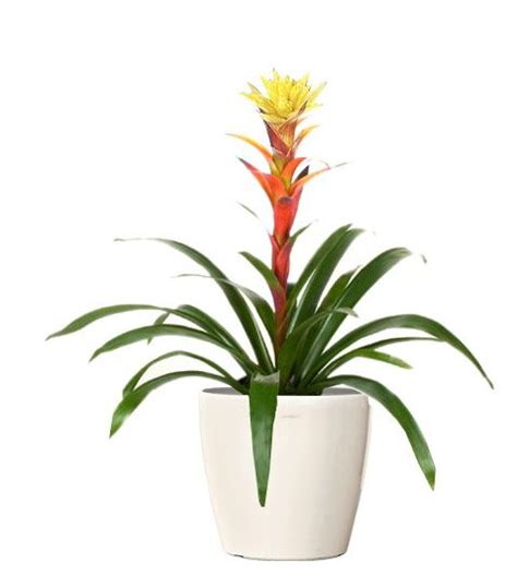 indoor plants online indoor plants online indoor palm trees and wholesale