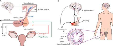 estrogen hormone effect on men female hormones estrogen for men pictures to pin on