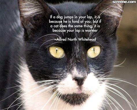 Cat Wallpaper With Quotes | muhammad nouman ali sheroz awais iqbal talha mohsin riaz