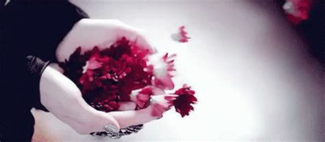 imagenes de flores gif imagenes de flores gif flowers discover share gifs