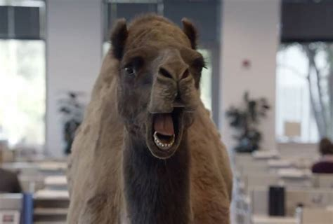 Guess What Day It Is Camel Meme