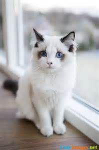 this is the most beautiful cat i ve ever seen cats