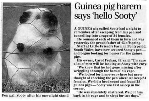 printable animal articles guinea pig booker s blog