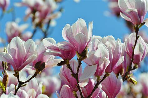 Fleurs De Printemps by Les Fleurs De Printemps Au Jardin