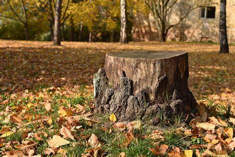 tree stump hire a professional to remove tree stumps