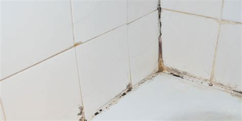mold growth in bathroom 11 most common places to check for mold in your home molekule blog